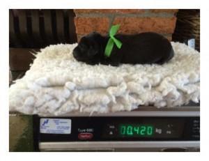 Dag 1 pups Kira