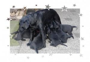 Damy met pups